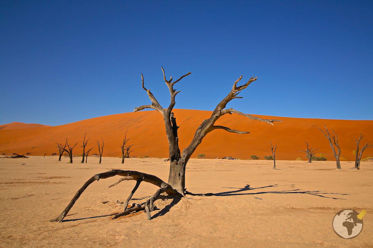 O que fazer na Namíbia : Dead Vlei